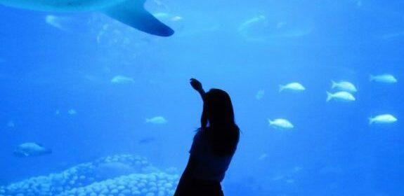 аквариум-барселоны