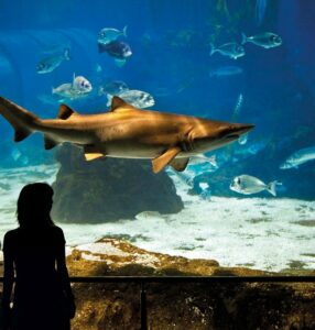 аквариум-в-барселоне